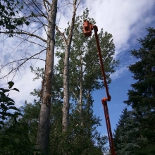 V & J Expert Tree Services in Regina, Moose Jaw and surrounding areas in Saskatchewan.